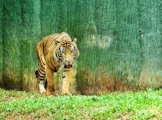 马六甲动物园-马六甲-尊敬的会员