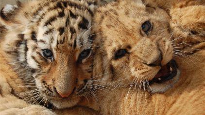 青岛森林野生动物世界14