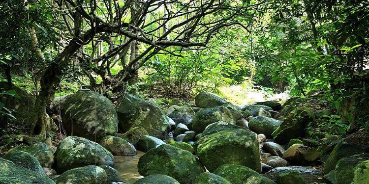 保亭七仙岭旅游度假区图片
