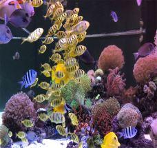 珊瑚礁海洋生态馆-厦门-AIian