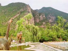 硅化木国家地质公园-延庆区-风媒行者