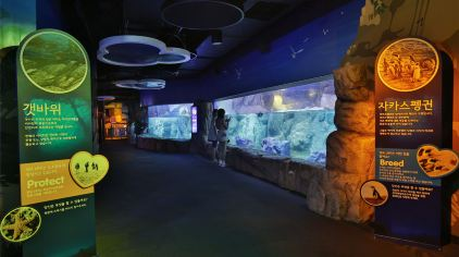 merlin-釜山水族馆 (19)