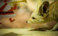 安尼蒙城市动物园-呼和浩特-AIian