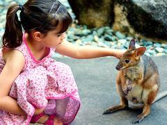 6日悉尼+黄金海岸·亲近考拉和海洋生物+电影世界畅玩