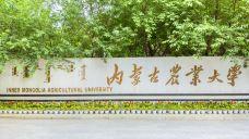 内蒙古农业大学-呼和浩特-行旅他乡