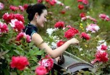 田馨玫瑰园-运城-AIian
