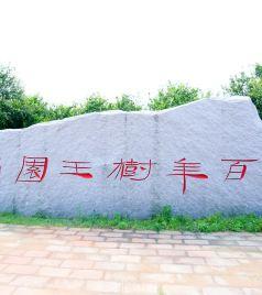 宜黄游记图文-抚州市南丰宜黄三日游:莫问春日风光好 文化生态总相宜