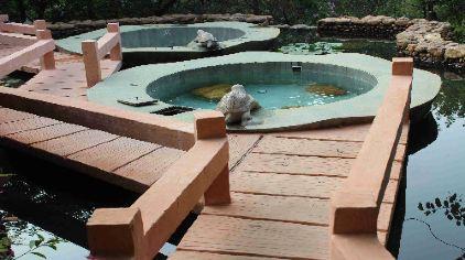 金龟泉温泉度假村 (5)