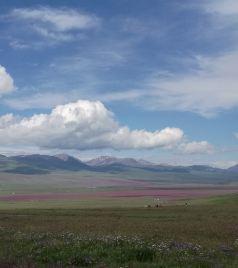 特克斯游记图文-渐入佳境的北疆行