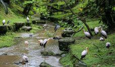 吉隆坡飞禽公园-吉隆坡-hiluoling