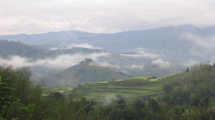 茶人谷 (4)