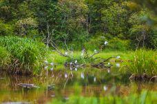 普洱国家公园犀牛坪景区-普洱-doris圈圈