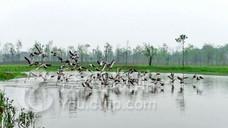 洋沙湖国家湿地公园