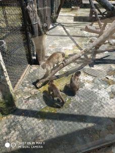 云南野生动物园-昆明-M30****9247