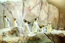 哈根贝克动物园-汉堡-尊敬的会员