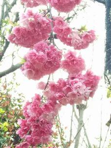 丰泽源植物园-嵩明-_WB5****984