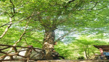 刘备洞峡谷 (7)