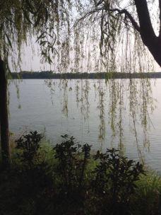 大纵湖-盐城-M41****024
