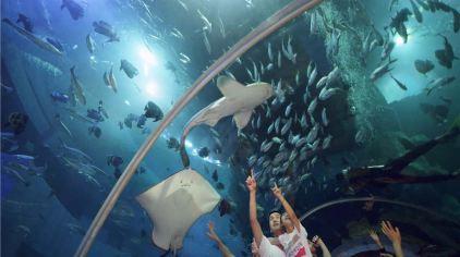 威海神游海洋世界图片 (18)