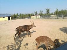 滨河野生动物世界-聊城-Yuaaa