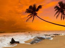 斯里兰卡7日6晚私家团(5钻)·【新品·1单1团】『A线2晚海滨·海龟育幼院』『B线1晚雅拉1晚海滨·小肯尼亚jeep猎游』『文化体验-狮子岩·佛牙寺·佩拉德尼亚大学·加勒古堡』网红茶山·海边双火车·赠3G卡