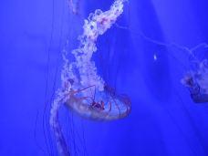 青岛海底世界-青岛-姜益达丶