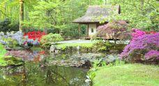 日本花园中心-海牙-尊敬的会员