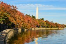 潮汐湖-华盛顿-doris圈圈