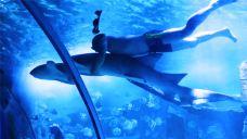 鸥兴海洋世界-怀化-AIian