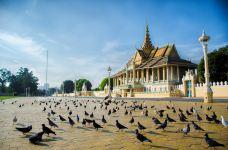 柬埔寨金边 皇宫鸽子-金边-戴坤