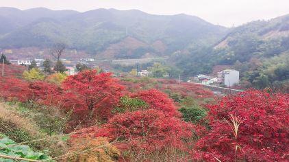 丹山赤水 (2)