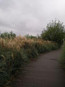 月亮湾公园-襄阳-Yhc9299
