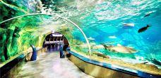 Aqua Vega 水族馆-安卡拉-iCniw