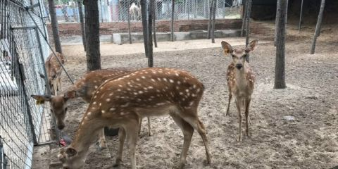 興潤森林動物園
