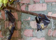 昂达西贝国家森林保护区-塔拿那利佛-M48****413
