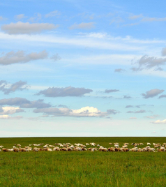 车臣共和国游记图文-过一个25℃的夏天!呼伦贝尔大草原风景如画