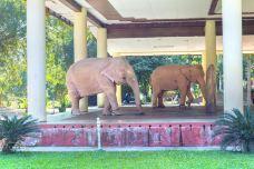 白象公园-仰光-doris圈圈