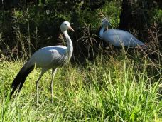 Austin Roberts Bird Sanctuary-比勒陀利亚