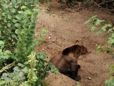 伯尔尼熊公园-伯尔尼-gq****3