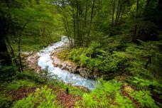 魔法森林-贝希特斯加登-doris圈圈