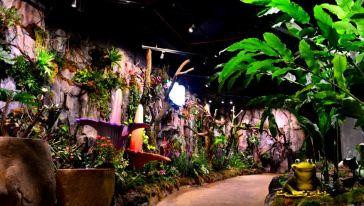 【踏春季特惠】99元抢正佳雨林生态植物园特惠成人票