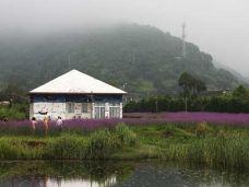 塔湾金沙景区-桃花岛-C-image2018