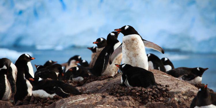 南极洲图片