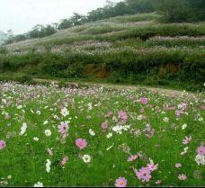 凤凰山公园-成都-_CFT01****9249117
