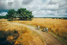 荷兰-doris圈圈