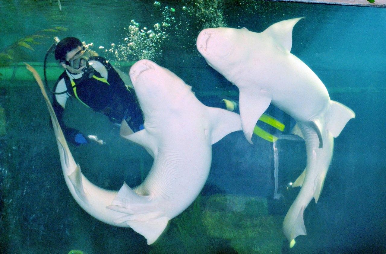 Nanning Underwater World Admission Ticket