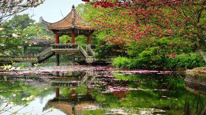 植物园 (10)