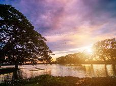 斯里兰卡11日私家团(5钻)·【亲子团·睡到自然醒·1单1团·纯玩】大象孤儿院+佛牙寺+锡兰茶园+雅拉国家公园+出海观鲸+加勒古堡·专车司导·无购物·专属管家