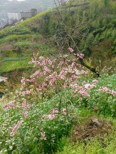 三丈水省级森林公园-金沙-M21****978