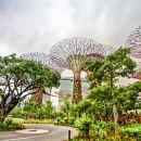 Gardens by the Bay + OCBC Skyway Ticket